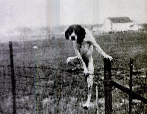 escape-dog.jpg