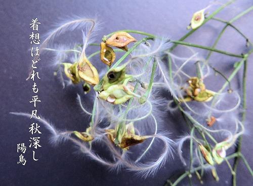 ku2063.jpg