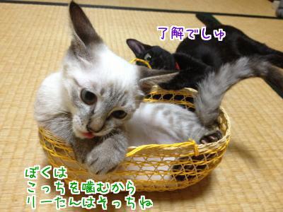XnXi_2johcgKUrK1378263155_1378265801.jpg