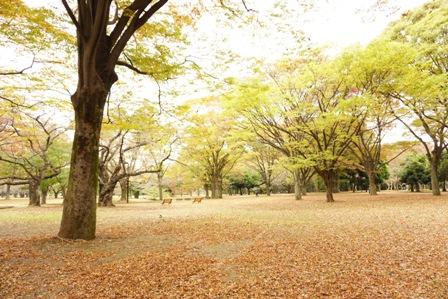 代々木公園 (6)