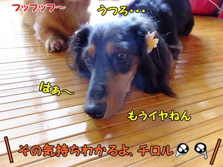 DSCF1121_20130721123719.jpg