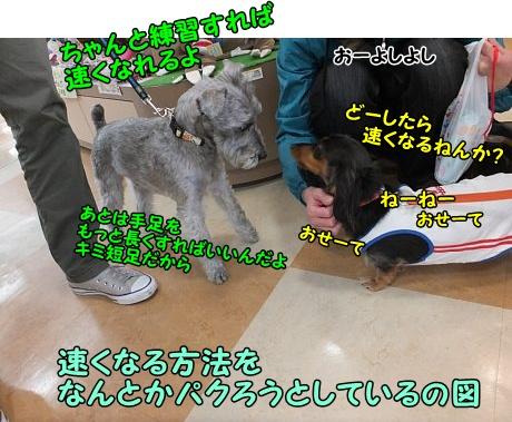 DSCF8405_201311201508098ea.jpg
