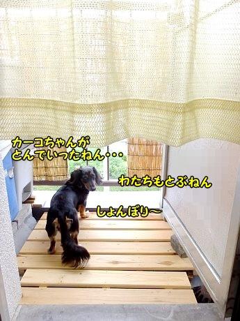 DSCF9010_20130716121448.jpg