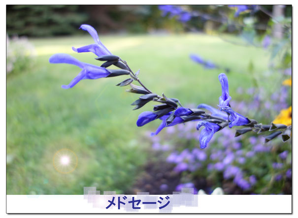 13-08-28_2201.jpg