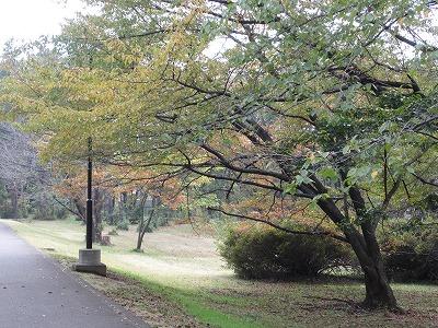 いつもの公園で紅葉!
