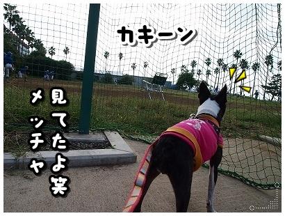 PA066191.jpg