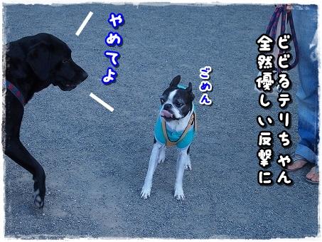 PA136739.jpg