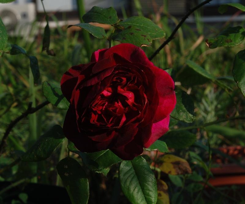 DSC_0424_2014_10_29.jpg
