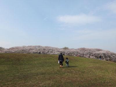 桜2013 その2