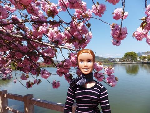 fujieda-20130413-03s.jpg