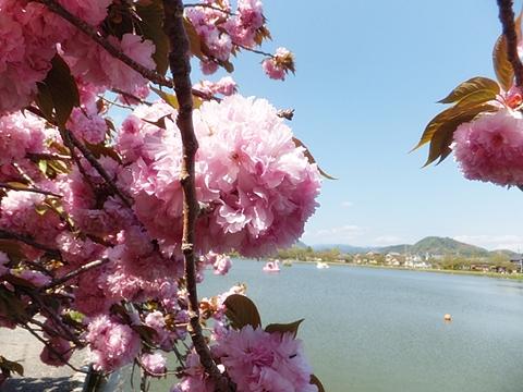 fujieda-20130413-05s.jpg