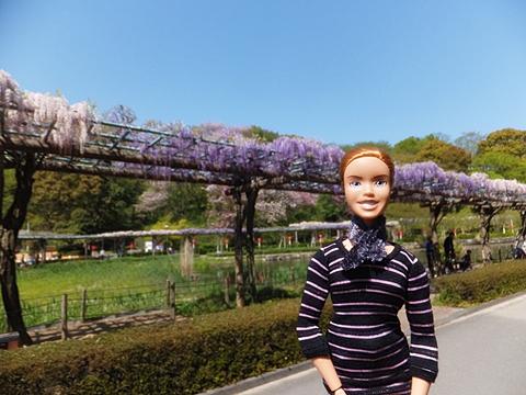 fujieda-20130413-18s.jpg