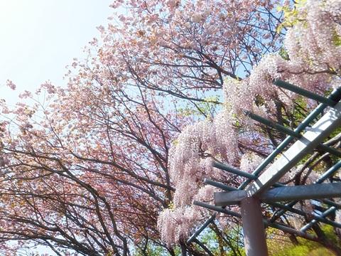 fujieda-20130413-20s.jpg