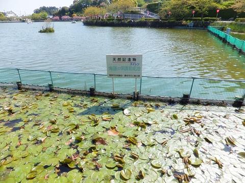 fujieda-20130413-21s.jpg