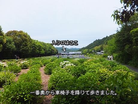 kamo-20130601-15s.jpg