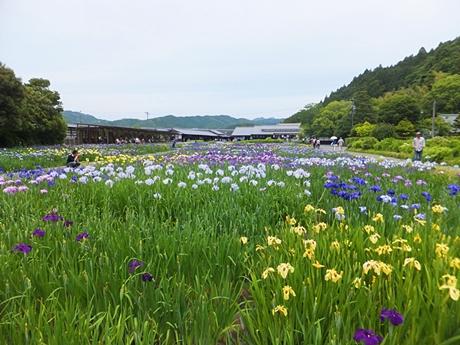 kamo-20130601-29s.jpg
