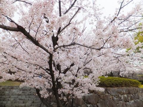 kofu-20130330-04s.jpg