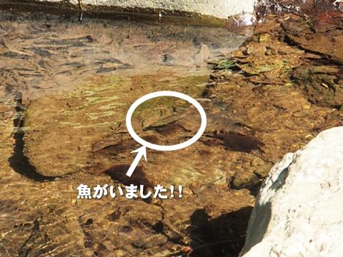 oohito-20130427-12s.jpg