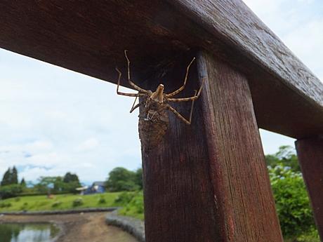 tanuki-20130622-01s.jpg