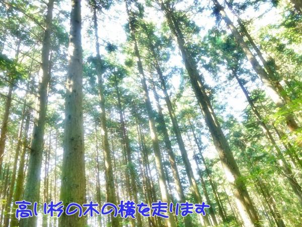杉の木の横