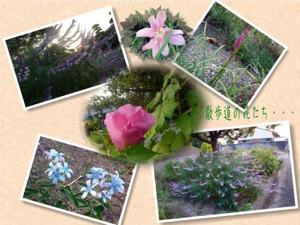 散歩道の花たち1