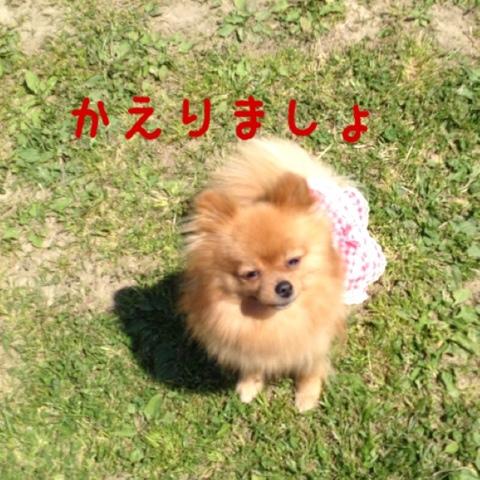 fc2blog_20130504170639cd9.jpg