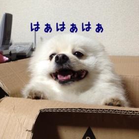 fc2blog_20130512214339390.jpg