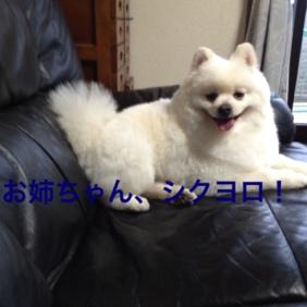 fc2blog_20130517210417cb4.jpg