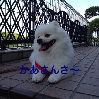 fc2blog_20130529215618d67.jpg