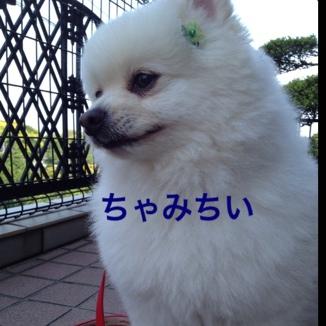 fc2blog_20130529220031e76.jpg