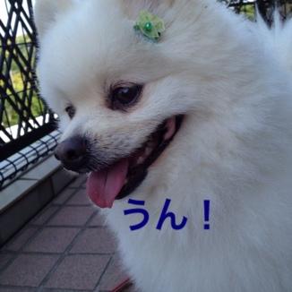 fc2blog_2013052922013992b.jpg