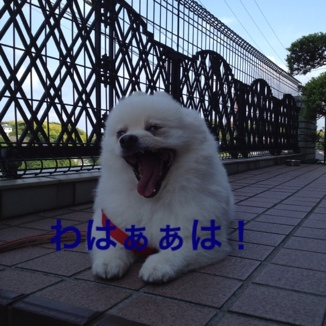 fc2blog_2013052922023133d.jpg