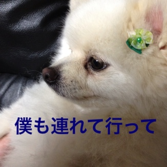 fc2blog_2013053120522544a.jpg