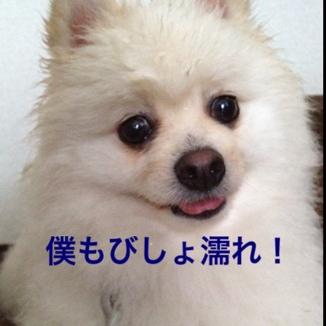 fc2blog_20130612214642e92.jpg