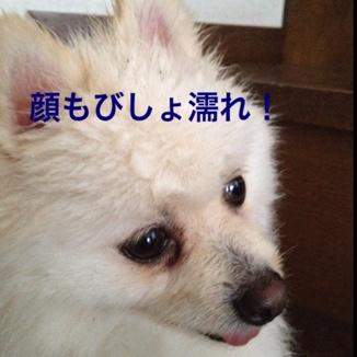 fc2blog_20130612214812da9.jpg