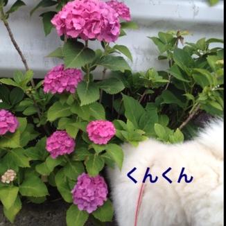 fc2blog_20130614205732e73.jpg