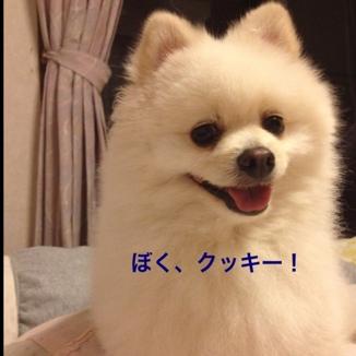 fc2blog_201306151901315dd.jpg