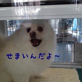 fc2blog_20130616172724bcc.jpg