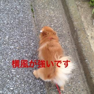 fc2blog_20130619121914bef.jpg