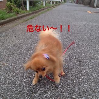 fc2blog_20130619121950c51.jpg