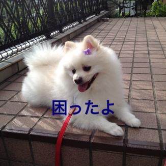 fc2blog_20130622205400c5d.jpg
