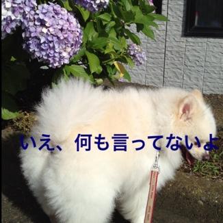 fc2blog_20130623190612e18.jpg
