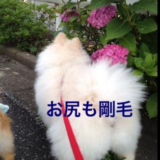 fc2blog_20130623190920572.jpg