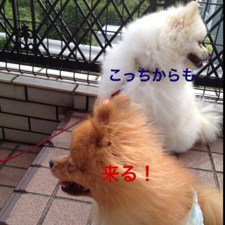 fc2blog_2013062420231155e.jpg