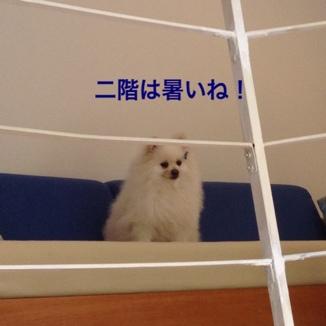 fc2blog_20130721164256b4b.jpg