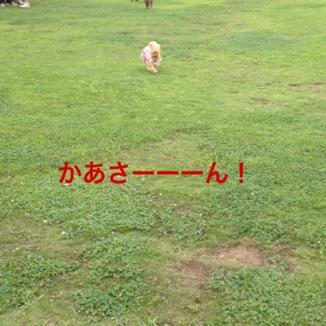 fc2blog_20130722214614ebb.jpg