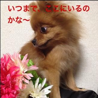 fc2blog_20130725152246498.jpg