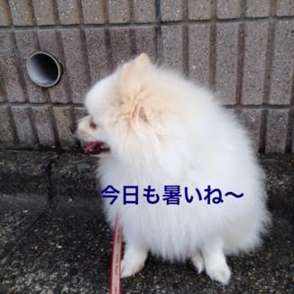 fc2blog_201307281848560e3.jpg
