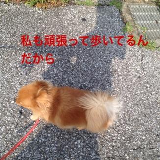 fc2blog_2013072818505740e.jpg