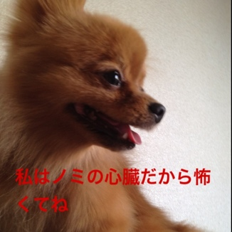 fc2blog_20130730200037678.jpg